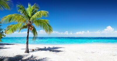 Wall mural Scenic Coral Beach With Palm Tree