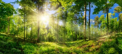 Wall mural Scenic forest of deciduous trees, with blue sky and the bright sun illuminating the vibrant green foliage, panoramic view