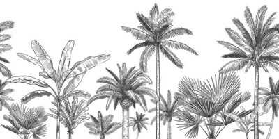 Wall mural Seamless horizontal tropical background. Hand drawn palm trees, sketch exotic tropic jungle leaves and paradise palm tree vector wallpaper illustration. Exotic palm tree botanical, rainforest foliage