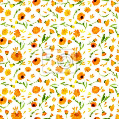 Seamless pattern with flowers calendula