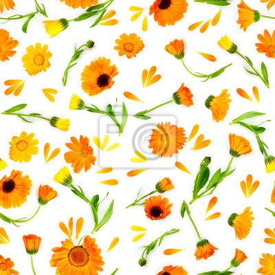 Seamless pattern with flowers marigold isolated on white background.