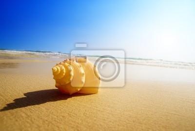 Wall mural seashell sand and ocean
