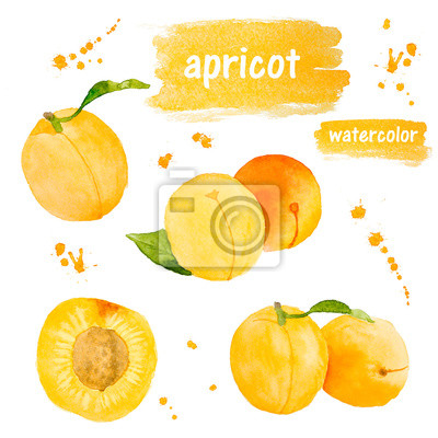 Set of apricot. Watercolor illustration