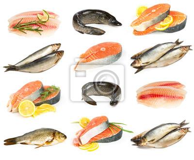 Set of fish isolated on white background.