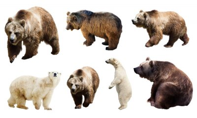 Wall mural Set of many bears. Isolated over white