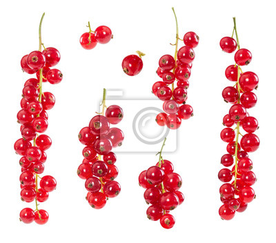Set of red currants