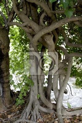 seven eleven tree