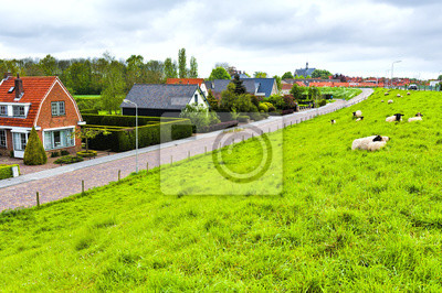 Sheep on Protective Dam in Holland