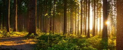 Wall mural Silent Forest in spring with beautiful bright sun rays
