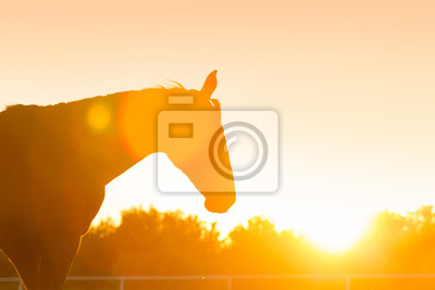 Silhouette of a horse against orange sunset sky