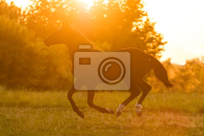 Silhouette of a running horse against orange sunset sky