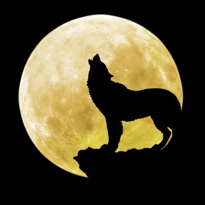 Wall mural Silhouette of a wolf in front of the moon