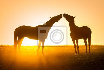 Silhouette of  couple horse against orange sunrise sky in field