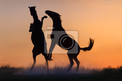 Silhouette of  two playing young horses against orange sunrise sky