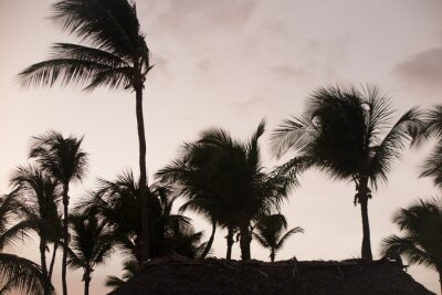 Wall mural Silhouette palm trees at beautiful sunset time