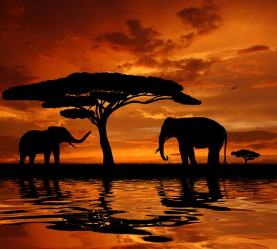 Wall mural Silhouette two elephants in the sunset