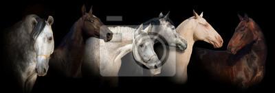 Six horse portrait on black background