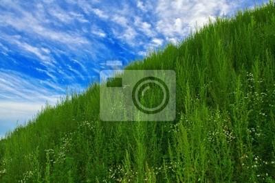 Wall mural sky&grass-2