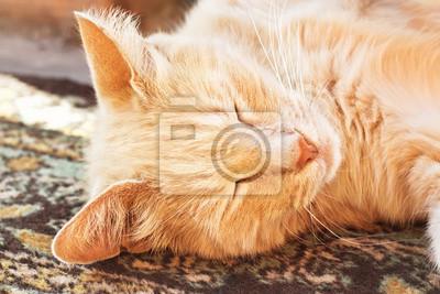 Wall mural Sleeping red cat