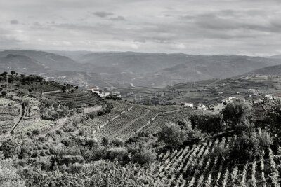 Wall mural Slopes covered with vineyards in Portugal