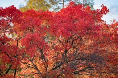 Small tree foliage in autumn colors