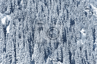 snow covered forest - textured winter background