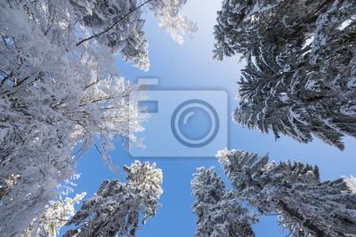 snow covered trees andblue sky