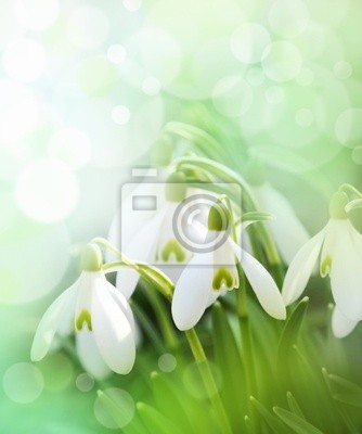 Wall mural snowdrops with beautiful bokeh
