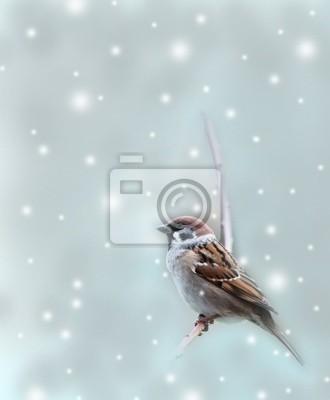 sparrow bird in winter time