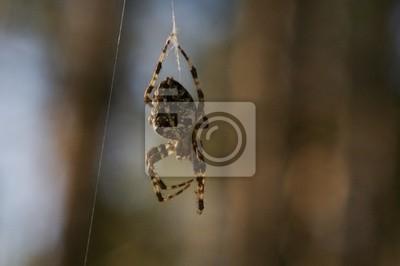 spiderman prototype 1