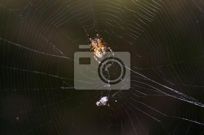 spiderman prototype 11