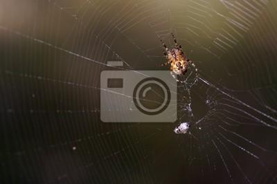 spiderman prototype 12