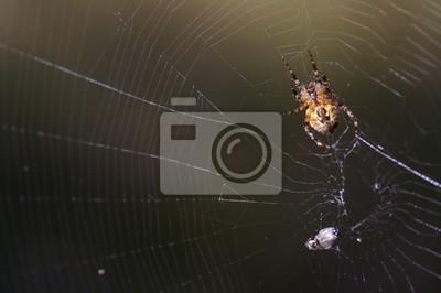 spiderman prototype 13