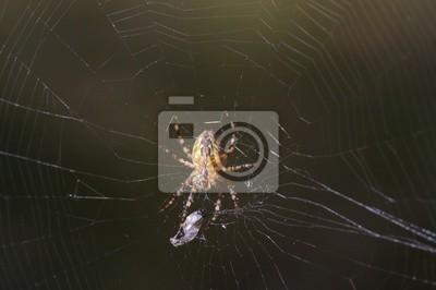 spiderman prototype 14