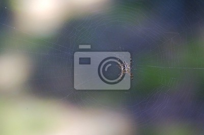 spiderman prototype 15