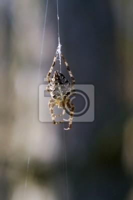 spiderman prototype 18