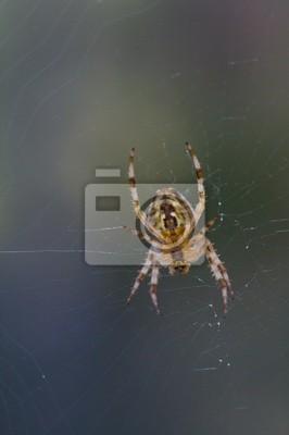 spiderman prototype 7