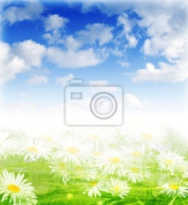 spring background with daisies flower