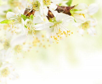 Wall mural Spring blossoms twig