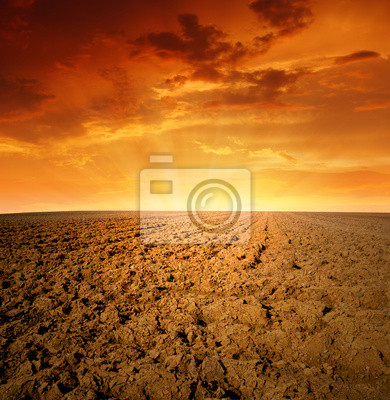 Spring field in the sunset