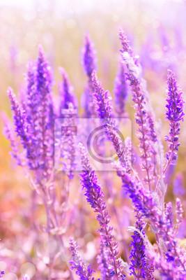 Spring flower lilac color