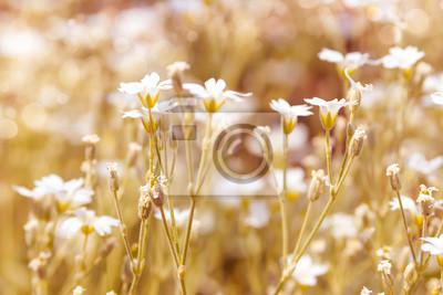 Spring flower white color