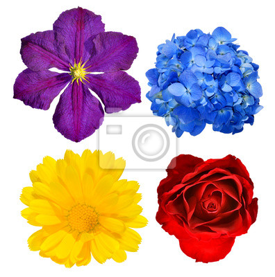 spring flowers closeup isolated on white