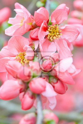 Wall mural Spring flowers closeup with pink blossom