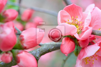 Wall mural Spring flowers with pink blossom