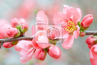 Wall mural Spring flowers with pink blossom and buds