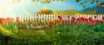 Wall mural Spring garden. Red tulips in garden Spring grass with flowers
