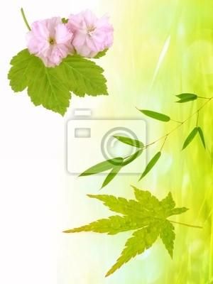 spring japan background with sakura flowers