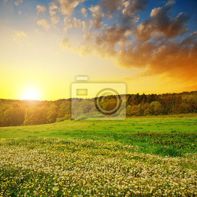 Spring landscape with blooming dandelions on meadow at sunset.