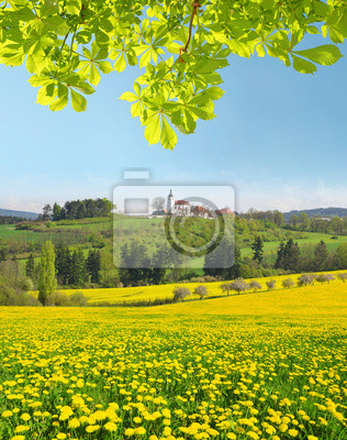 Spring landscape with dandelions on meadow and chestnut tree